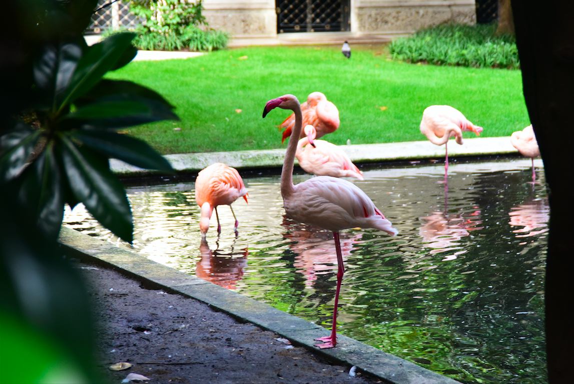 Weekend in Milan villa Invernizzi flamingo
